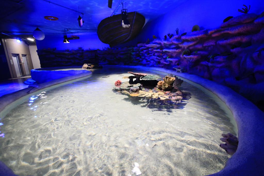 acuario inbursa 2