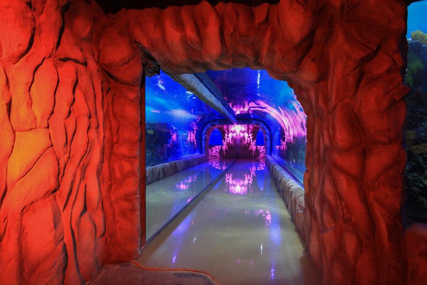 acuario inbursa 8